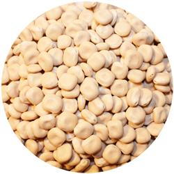 Lupini Beans Small