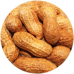 Peanut In Shell Raw