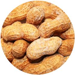 Peanut In Shell Roasted Salted