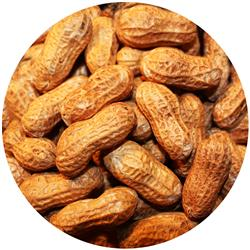 Peanut In Shell Roasted Unsalted