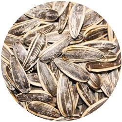 Sunflower Seeds - Salted